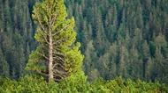División Forestal